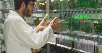 Progetto Laboratorio Zebrafish